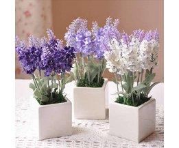 Art Lavendel Silke