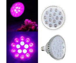 Grow LED Light Purple Light Displays