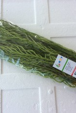 Acacia/Cha-om Leaf (100gr.)