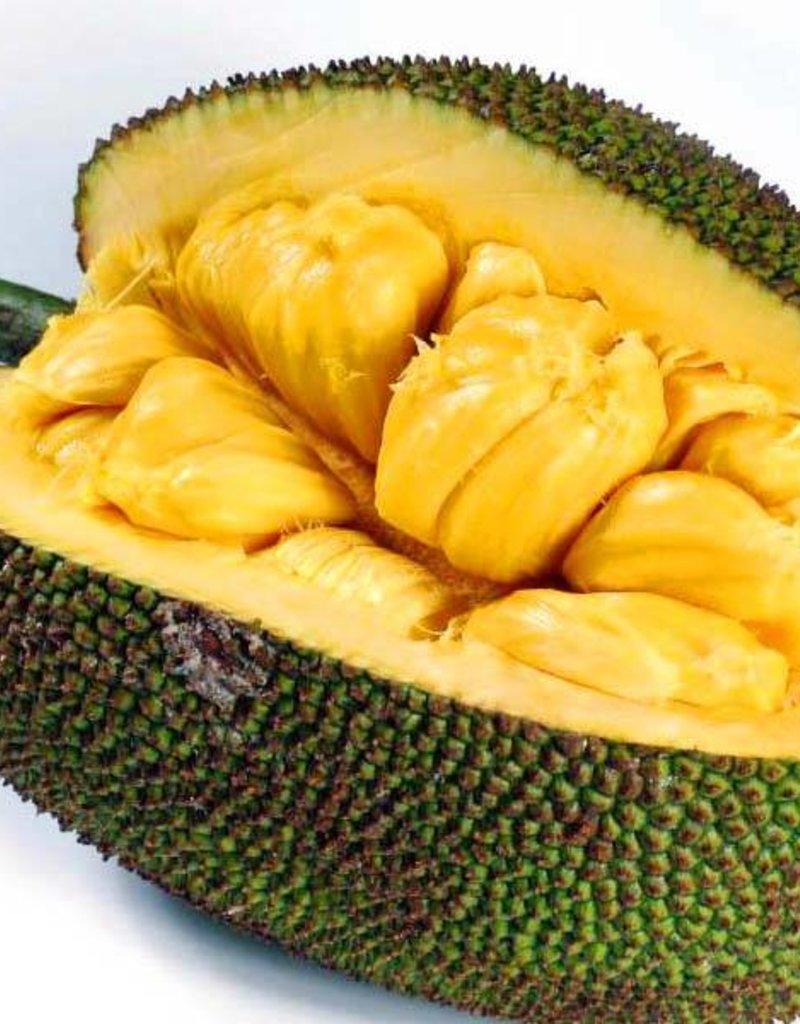 Jackfruit_heel - 10 kg -20 kg