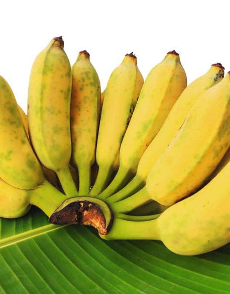 Kluy Nam Wah/ Thai Banana _1kg.
