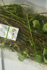 Asiatic Pennywort (100gr.)