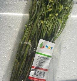 Yod Katin leaf (100gr.)