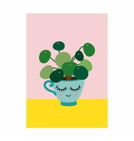 Postkaart pannenkoekenplant