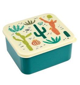 Brooddoos cactus