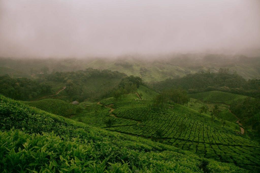 8 geniale weetjes over je favoriete kopje thee
