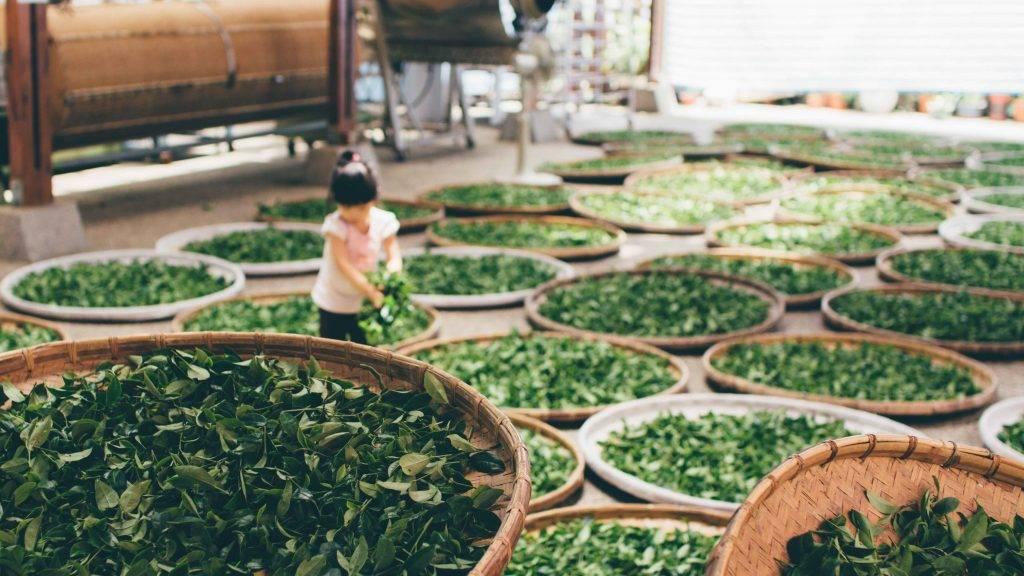 Cafeïne gevoeligheid en thee