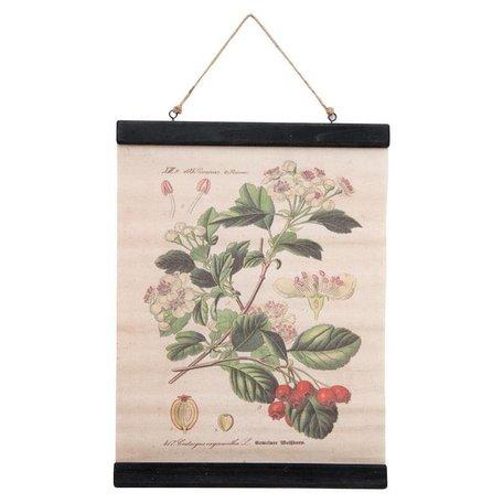 Botanic schoolplaat - bloemen / bessen