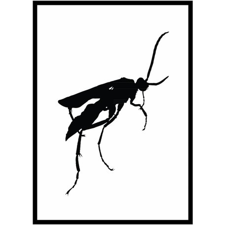 Black white insects poster
