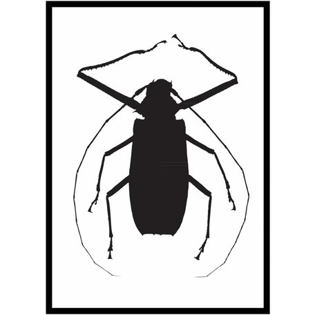 Graphic poster Black beetle