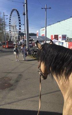 BEA Bern mit dem Expertenforum-Pferdegerecht vom 4.05-13.05.2018