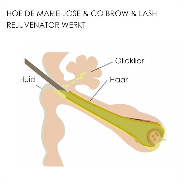 Hoe de Marie-José & Co Brow & Lash Rejuvenator werkt
