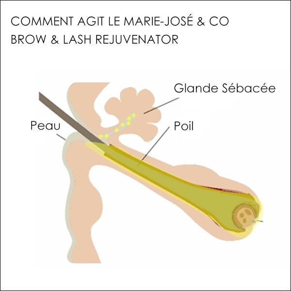 Comment agit le Marie-José & Co Brow & Lash Rejuvenator