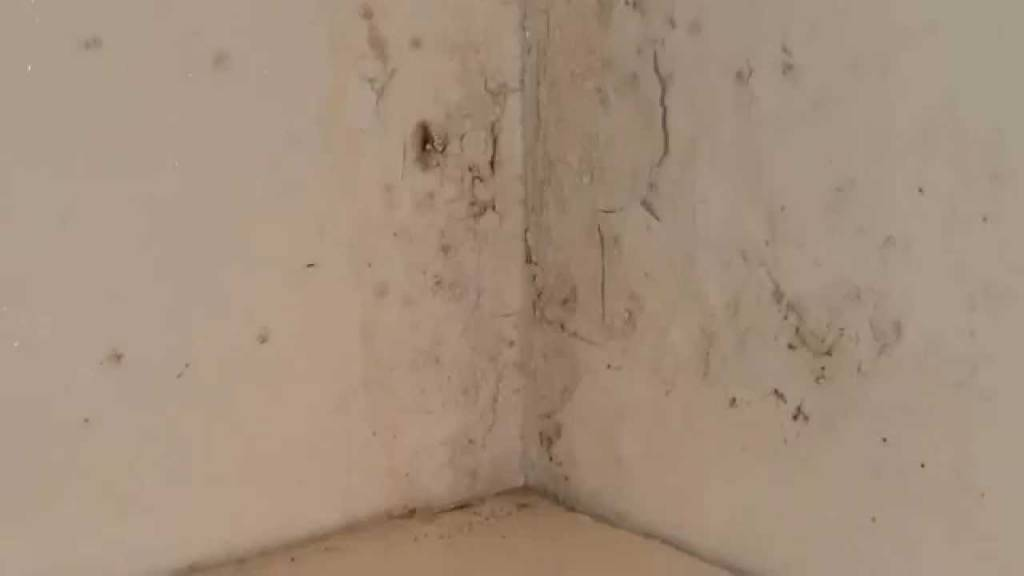 Stucwerk en Sierpleisterreiniger (5 L)