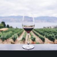 Quel vin vous convient?
