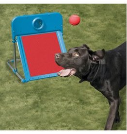 Rosewood Agility Flyball