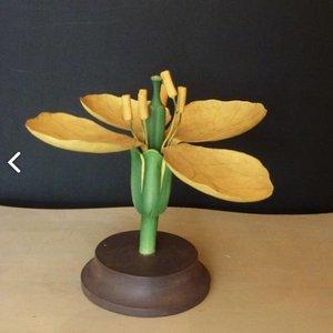 Botanical model Fleur Jaune