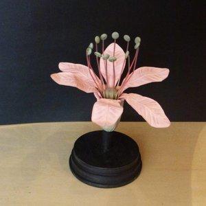 Botanisch Model Fleur Rose