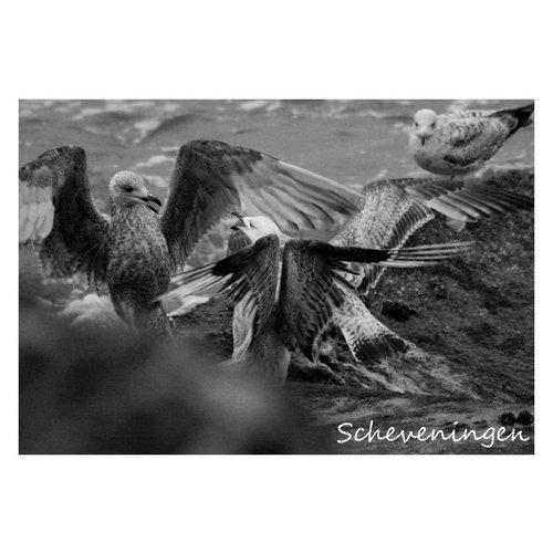 Ivooosterbaan Ivooosterbaan Scheveningen Vogels Postkaart