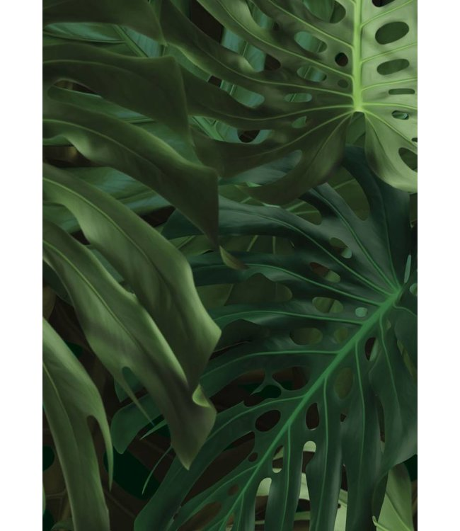 Botanical Tapete Monstera