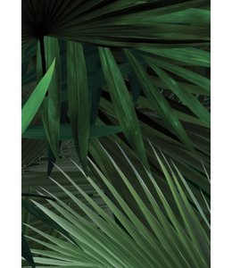 Behang Palm