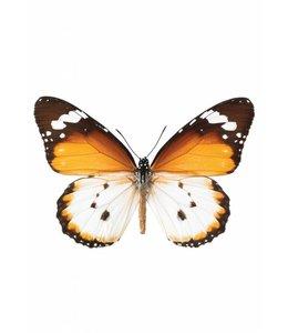 Hagedornhagen Hagedornhagen muursticker Butterfly 950