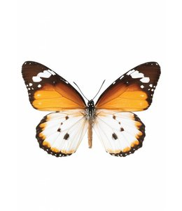 Hagedornhagen Wandtattoo Butterfly 950