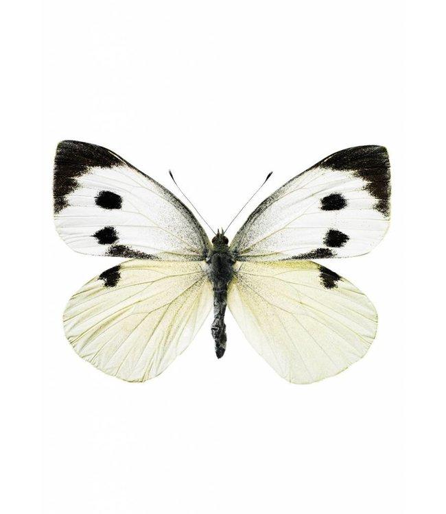 Hagedornhagen Wandtattoo Butterfly 956, 17 x 12 cm
