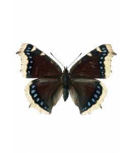 Hagedornhagen Hagedornhagen muursticker Butterfly 957
