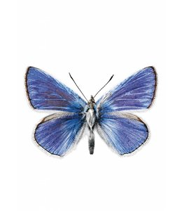 Hagedornhagen Hagedornhagen muursticker Butterfly 959