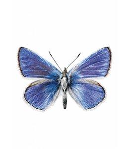 Hagedornhagen muursticker Butterfly 959