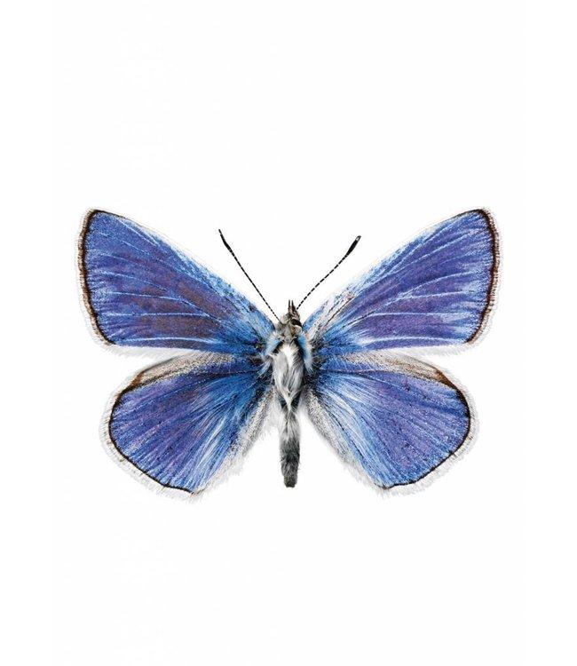 Hagedornhagen Hagedornhagen muursticker Butterfly 959, 17 x 11 cm