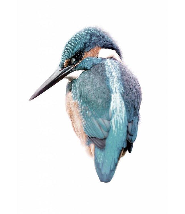 Wall sticker Kingfisher, 15 x 11 cm