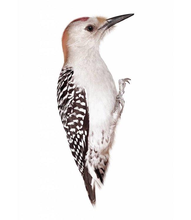 Wall sticker Woodpecker, 8 x 20 cm