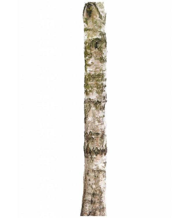 Wall sticker Home Tree 4, 28 x 260 cm