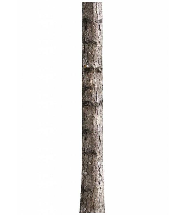 Muursticker Home Tree 6, 26 x 260 cm