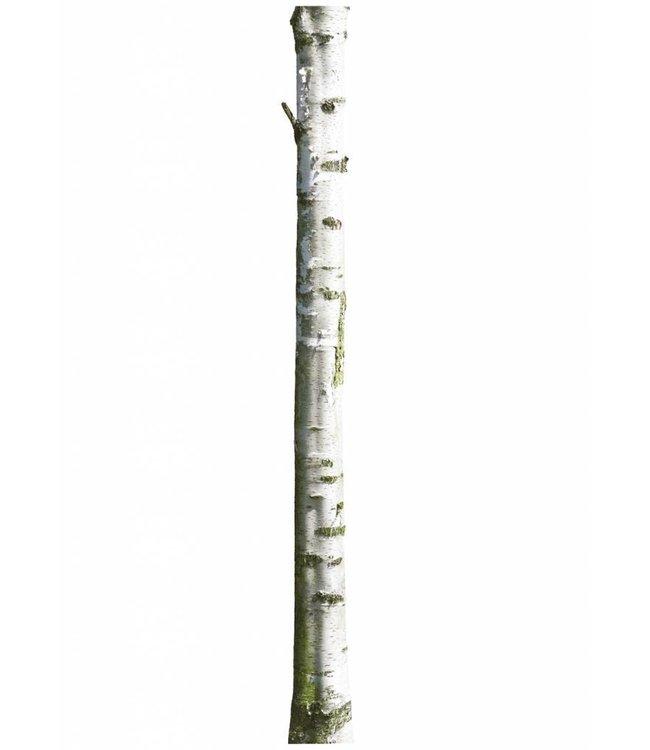 Muursticker Home Tree 7, 20 x 300 cm