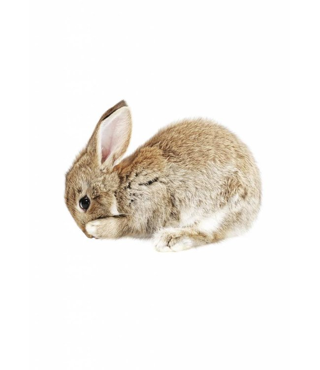 Wall sticker Baby Rabbit, 13 x 10 cm