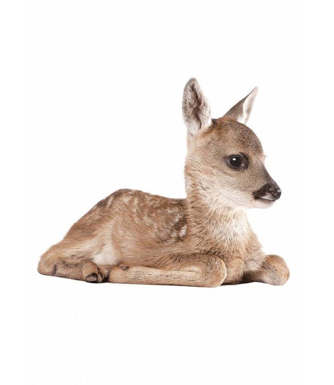 Wandtattoo Deer, 40 x 33 cm