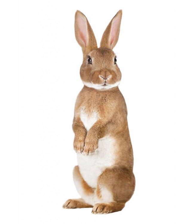 Wall sticker Rabbit, 12 x 32 cm