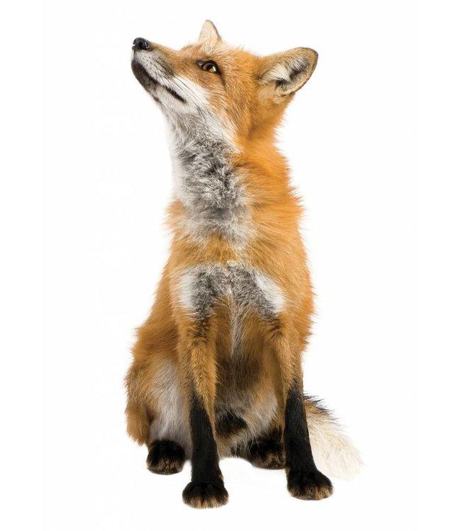 Wall sticker Fox, 23 x 46 cm