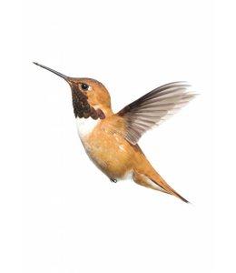 Muursticker Kolibrie