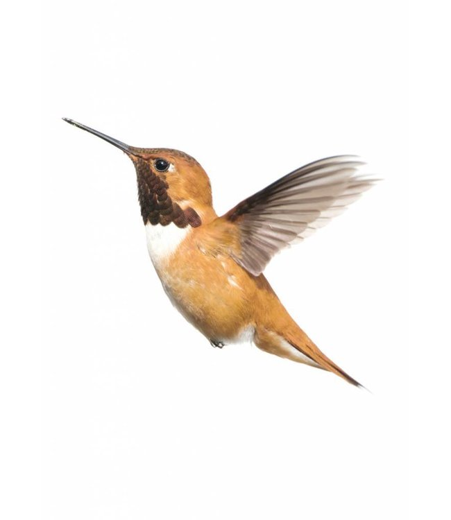 Wall sticker Hummingbird, 22 x 19 cm