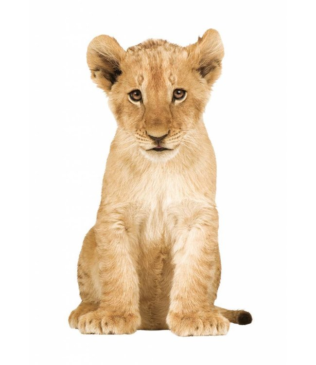Wandtattoo Lion Cub, 28 x 48 cm