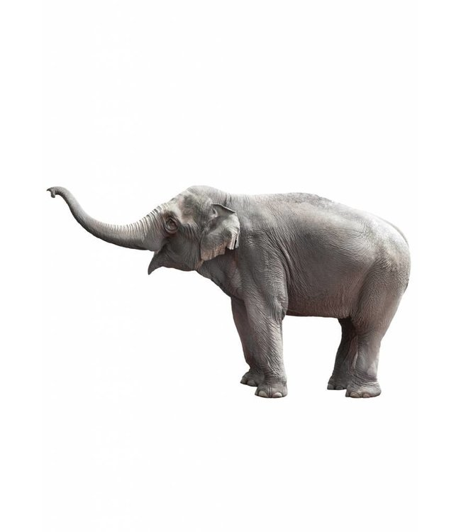 Wall sticker Elephant, 100 x 58 cm