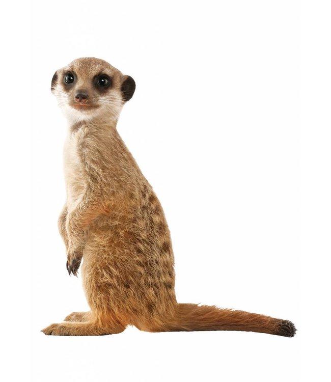 Wandtattoo Meerkat, 52 x 55 cm