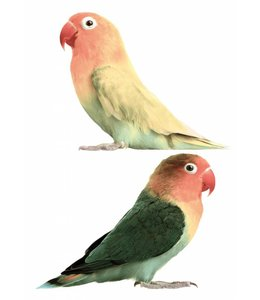 Muurstickers Lovebirds