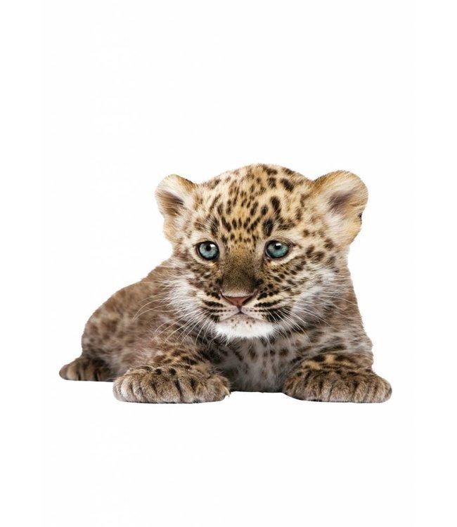 Wandtattoo Leopard Cub, 23 x 18 cm