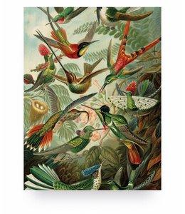 Print op hout Exotic Birds, S