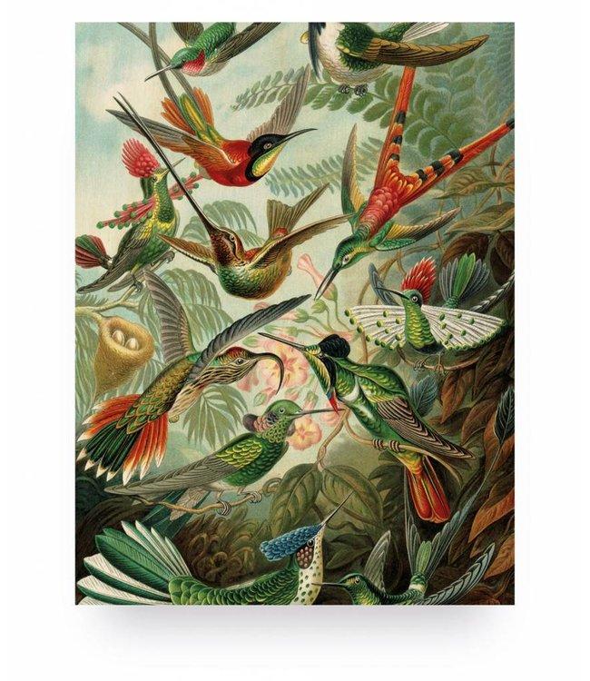 Print op hout, Exotic Birds, S, 45 x 60 cm